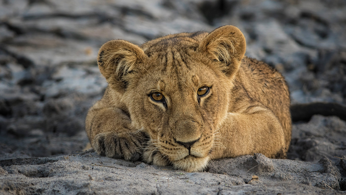 captured-in-africa-2015-home-banner-9