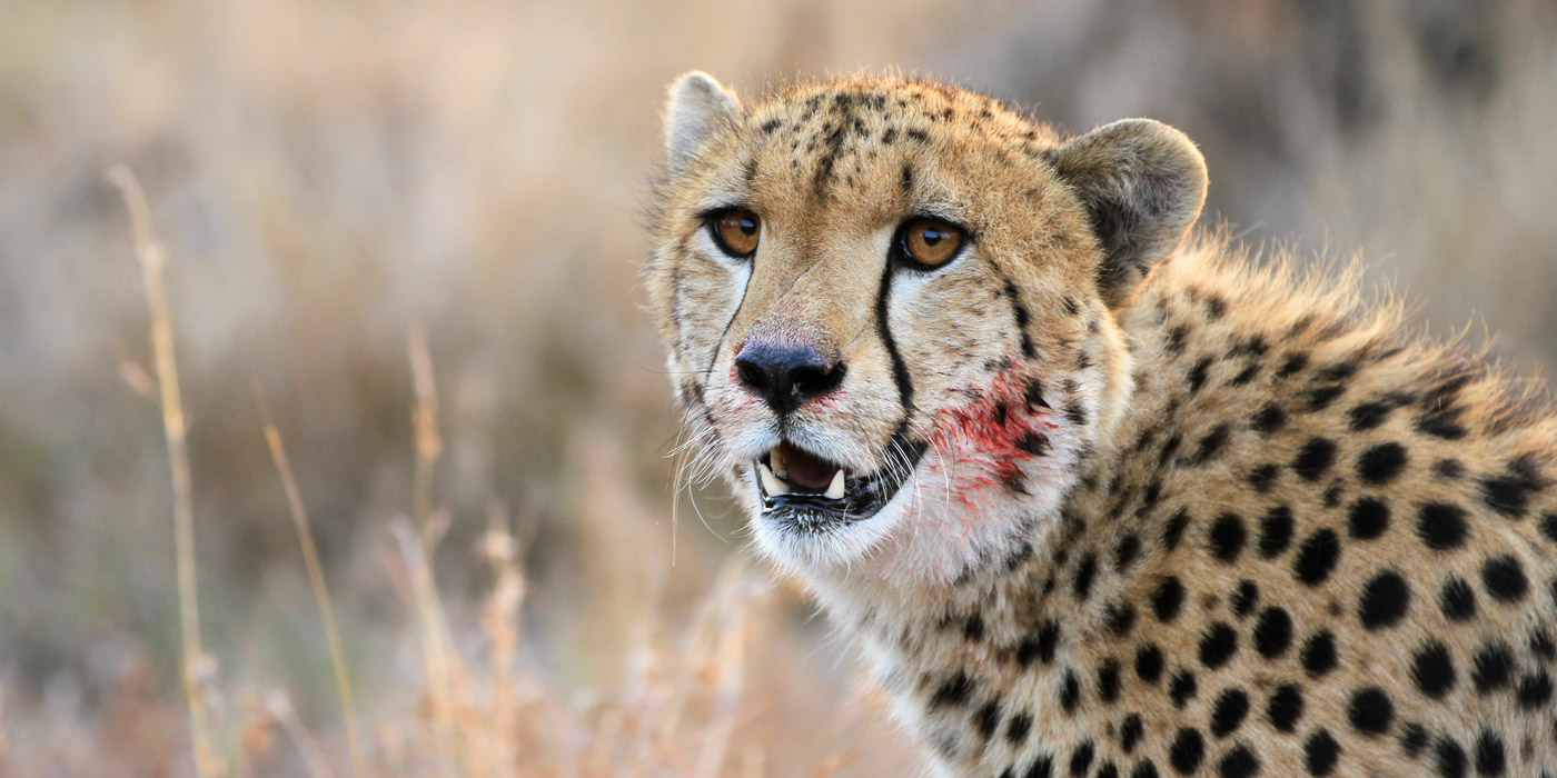captured-in-africa-2015-home-4