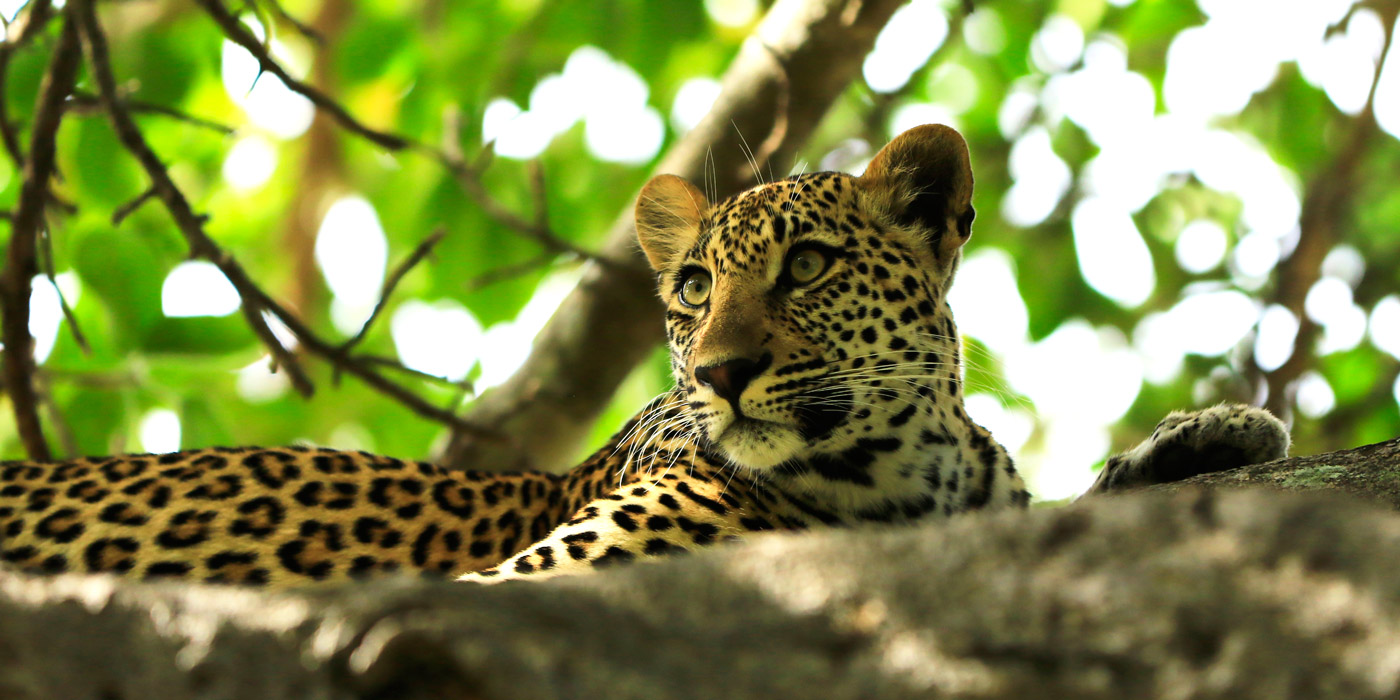 captured-in-africa-2015-home-banner-21